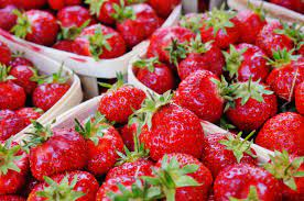 Strawberry Picking, Picnic in the Park and Donation